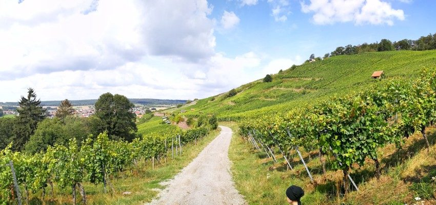 Weinberge in Michelbach